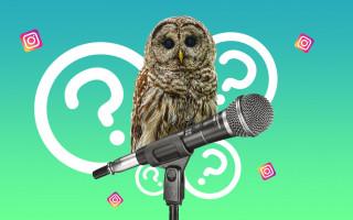 О чем можно поговорить в Инстаграм?